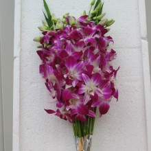 BOUQUET 15 STEMS DENDROBIUM